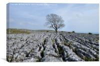 The Lone Tree Malham, Canvas Print