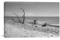 Covehithe Beach Monochrome, Canvas Print