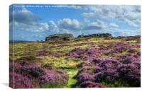 Ilkley Moor in bloom, Canvas Print