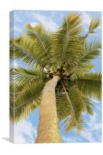 What a lovely bunch of coconuts, Canvas Print