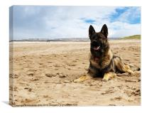 German Shepherd Dog, Canvas Print