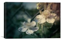 Beautiful Bramble., Canvas Print