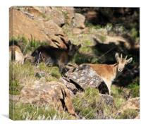 Andalucian Wildlife, Canvas Print
