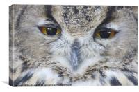 Wise Owl eyes, Canvas Print