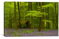 Embley Wood Bluebells, Canvas Print