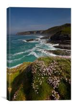 Trebarwith Strand Thrift, Canvas Print