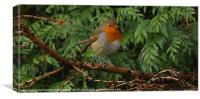 ROBIN IN TREES, Canvas Print