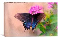 Pipevine Swallowtail Butterfly, Canvas Print