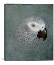 The Love of a Gray, Canvas Print