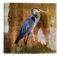 Great Blue Heron, Canvas Print