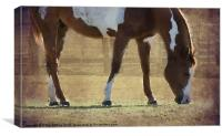 Grazing, Canvas Print