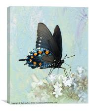 Pipevine Swallowtail Butterfly in Summer, Canvas Print