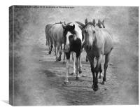 Quarter Horse Herd in Black and White, Canvas Print