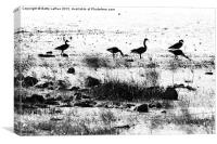 Canada Geese in Black and White, Canvas Print