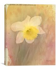 Dancing With The Daffodils, Canvas Print
