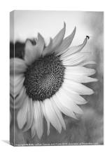 Sunflower in Black and White, Canvas Print
