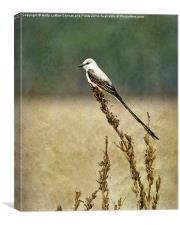 Scissor-tailed Flycatcher, Canvas Print