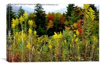 Fall Color along Scenic Highway, Canvas Print