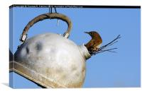 House wren in New Home, Canvas Print