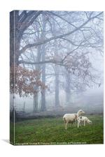 Winter Lamb and Ewe Foggy Day, Canvas Print