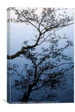 Alder tree reflected in water, Canvas Print