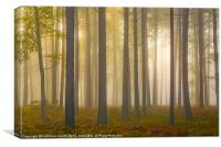 Tree trunks in mist, Canvas Print