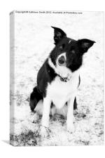 Border collie dog in snow, Canvas Print