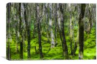 Forest in green moss, Canvas Print