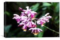 Beautiful Orchid, Canvas Print