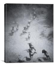 Race to the river, Canvas Print