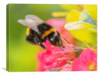 The Busy Bee, Canvas Print