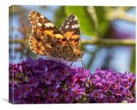 The Painted Lady, Canvas Print