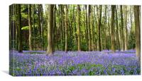 Arty bluebell wood, Canvas Print