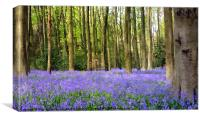 Bluebell wood in texture, Canvas Print