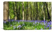 Enchanting bluebell wood!, Canvas Print
