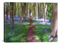 Pathway through the Bluebell wood., Canvas Print