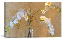 Orchid display!, Canvas Print