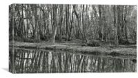 Woodland reflections, Canvas Print