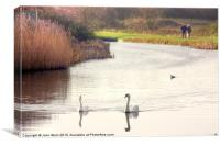 Bonded Swans on the Canal, Canvas Print