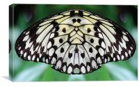 Butterfly wing, Canvas Print