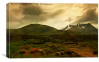 black mts., Canvas Print