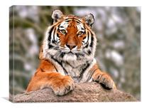Tiger resting on rock, Canvas Print