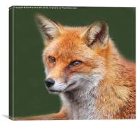 Dreamy Fox, Canvas Print