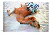 Camel Resting in the Sahara, Canvas Print