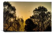 Trees Silhouetted against Autumn Sky (2), Canvas Print