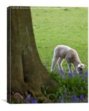 Lamb in the Bluebells, Canvas Print