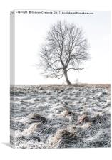 Lone Tree in Winter, Canvas Print