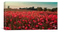 The Poppies of Remembrance..., Canvas Print