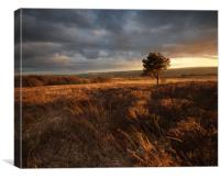 Revidge Sunset, Canvas Print