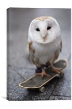 Skateboarding owl, Canvas Print